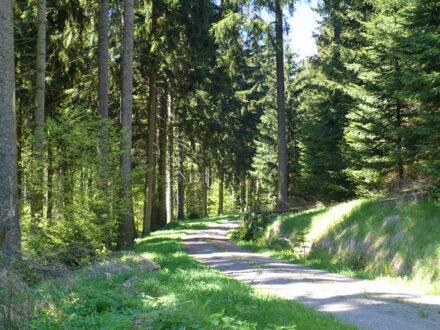 Wanderweg in Holzhau