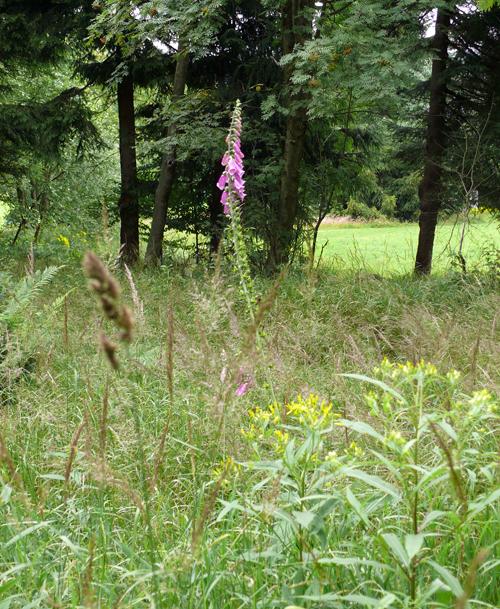 Wildblumenland Erzgebirge